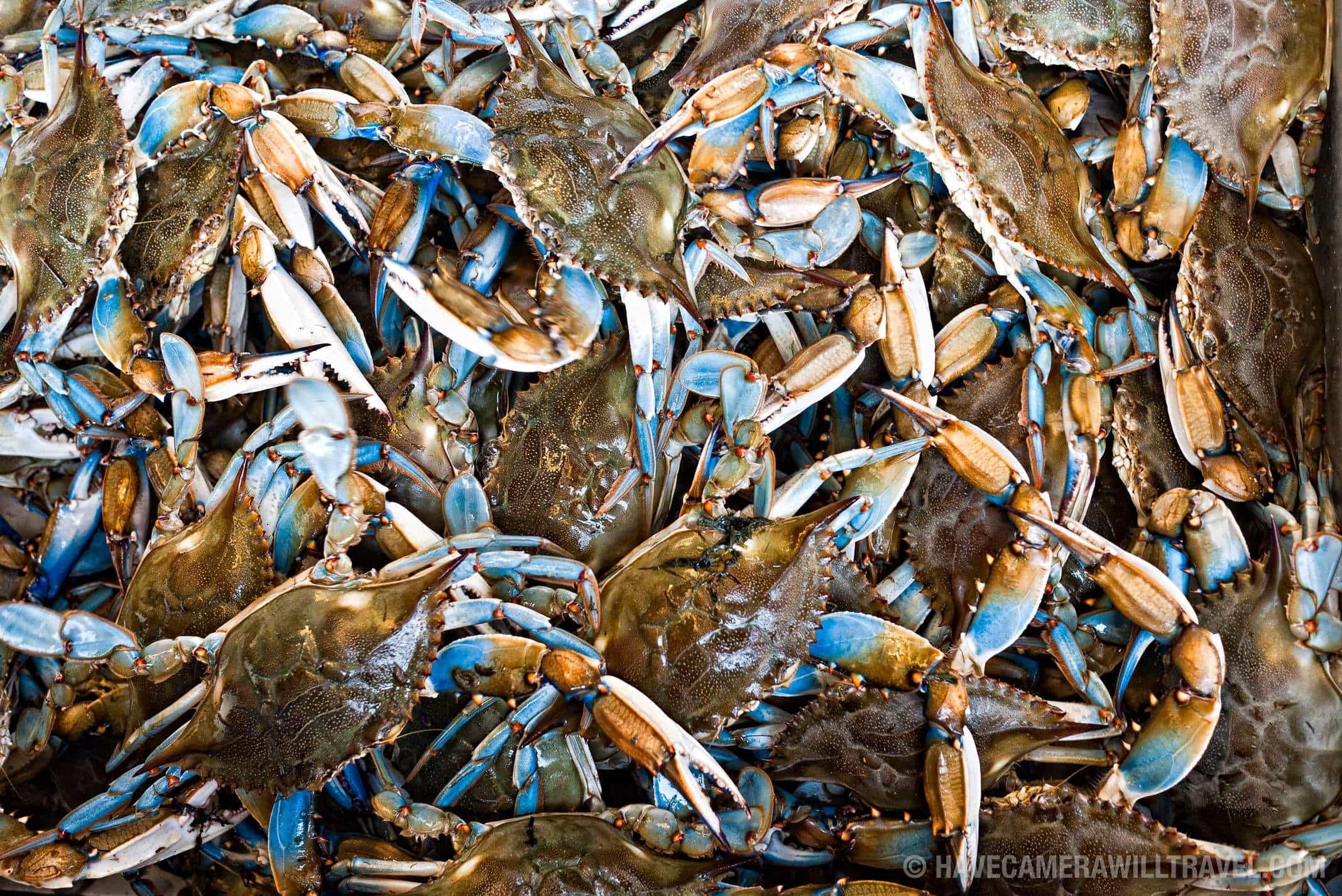 Maine avenue fish market washington dc photo guide for Waterfront dc fish market