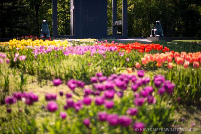 Netherlands Carillon Arlington VA Tulips at Base