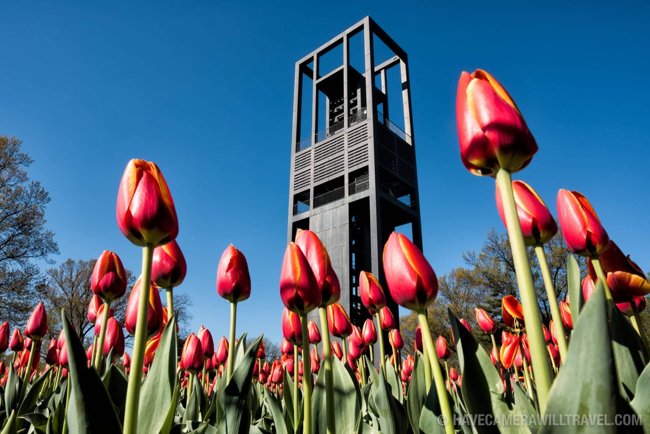 Netherlands Carillon in Arlington, Virginia, with Tulips