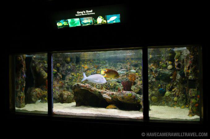 National Aquarium Downtown Washington Dc Photo Guide