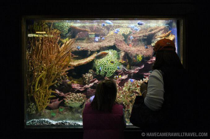 National Aquarium, Downtown | Washington DC Photo Guide