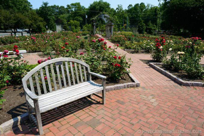 Rose Garden in Arlington Virginia Park Bench