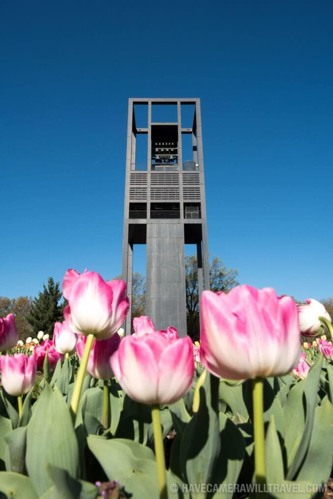 Tulips at the Netherlands Carillon in Arlingon, Virginia