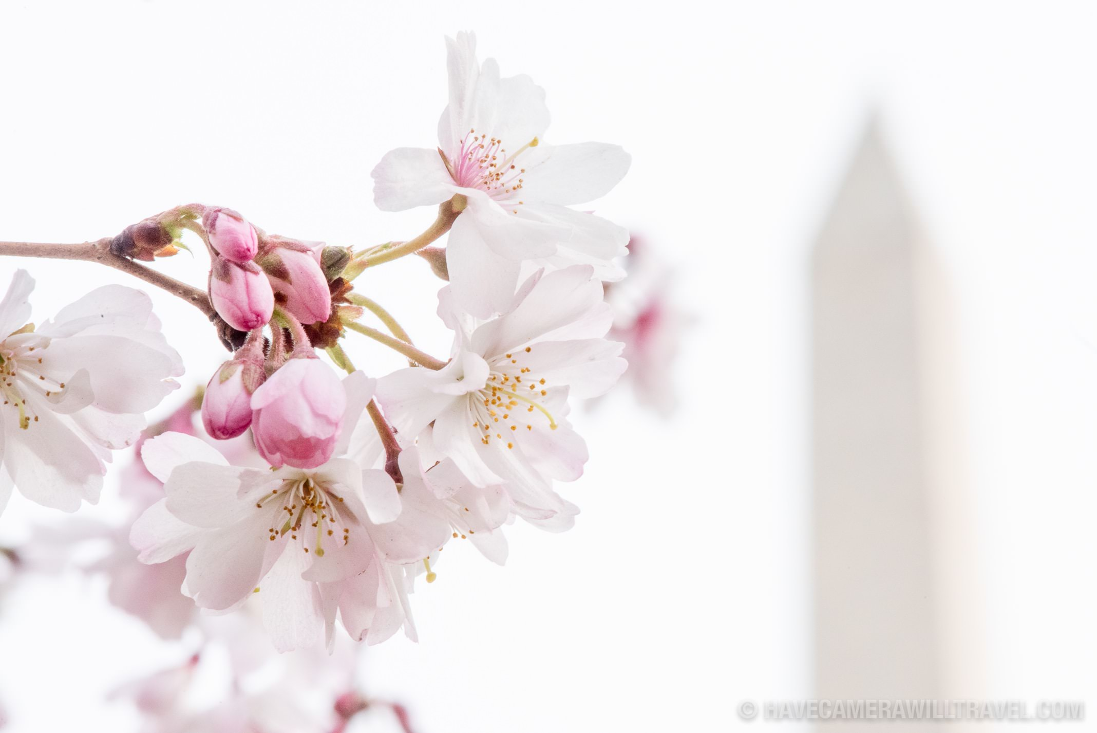 How-to Guide | Cherry Blossoms with the Washington Monument