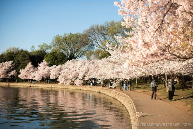 Washington DC Cherry Blossoms - March 29, 2016