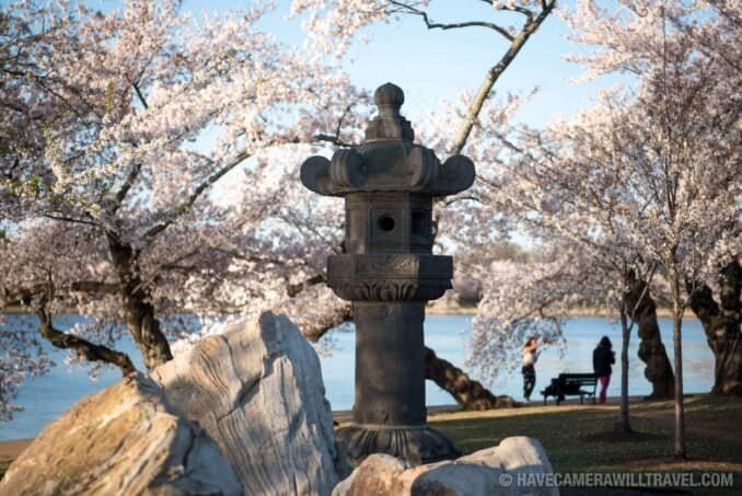 Washington DC Cherry Blossoms - March 29, 2016 - Japanese Lantern